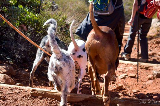 dogs walking on hike