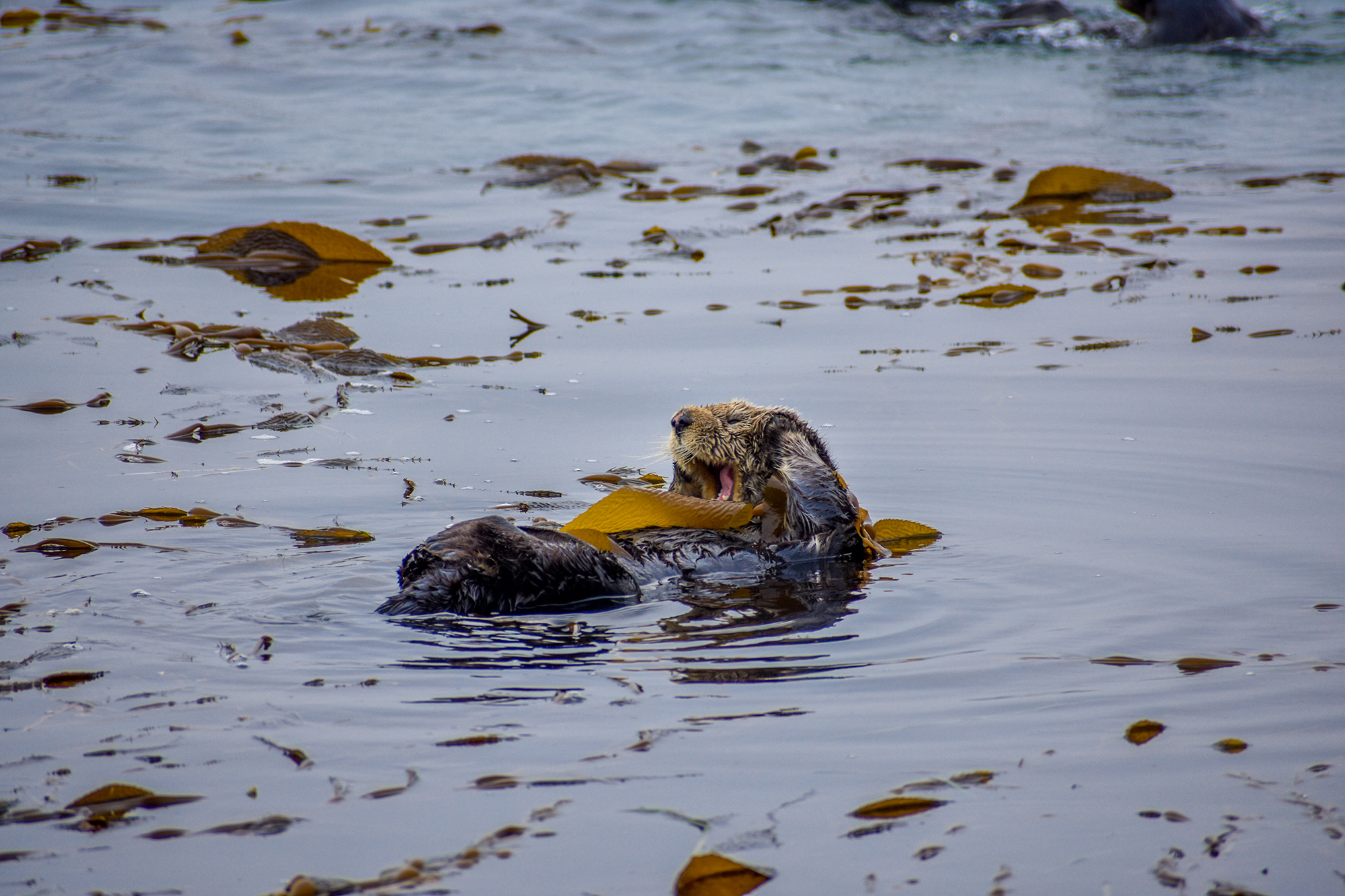 Sea otter waking up in Morro Bay.